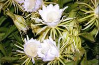 動・植物の画像2