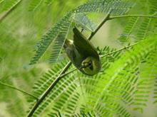 世界自然遺産など環境保全の推進に関する事業